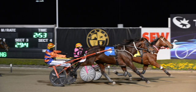 Luvstuenthral scores a fighting win for trainer Graeme Hartman in the trotting race at Menangle on Saturday night