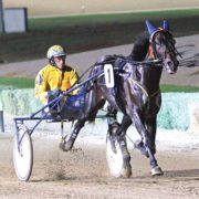 Trotter in enhance stallion ranks