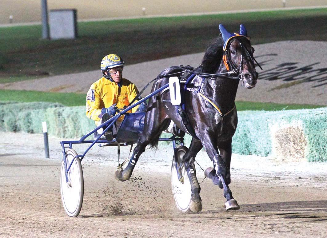 Trotter in enhance stallion ranks