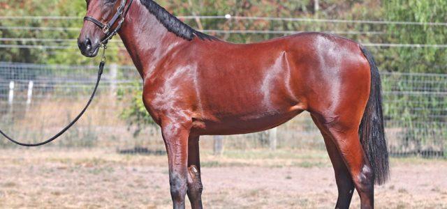 Leading horseman eager for Sale