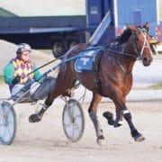Speedy mare races into record books