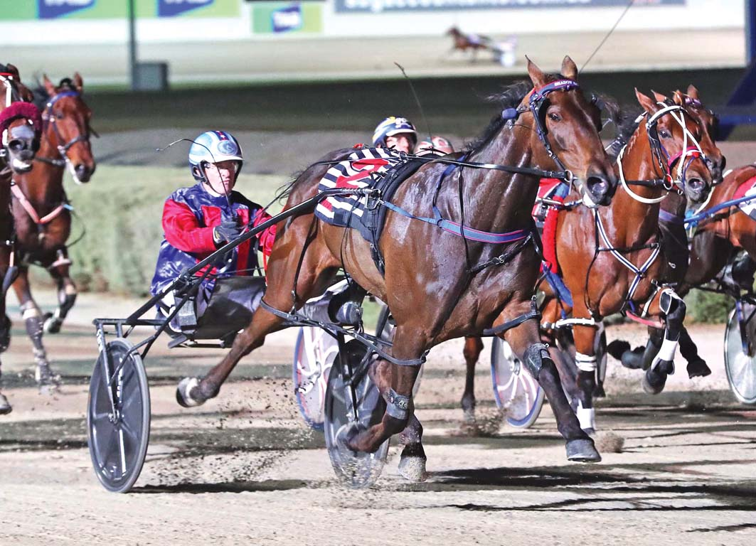 Bull heads early Inter Dominion market