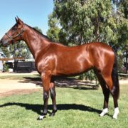 Mixed results from APG Sydney Sale