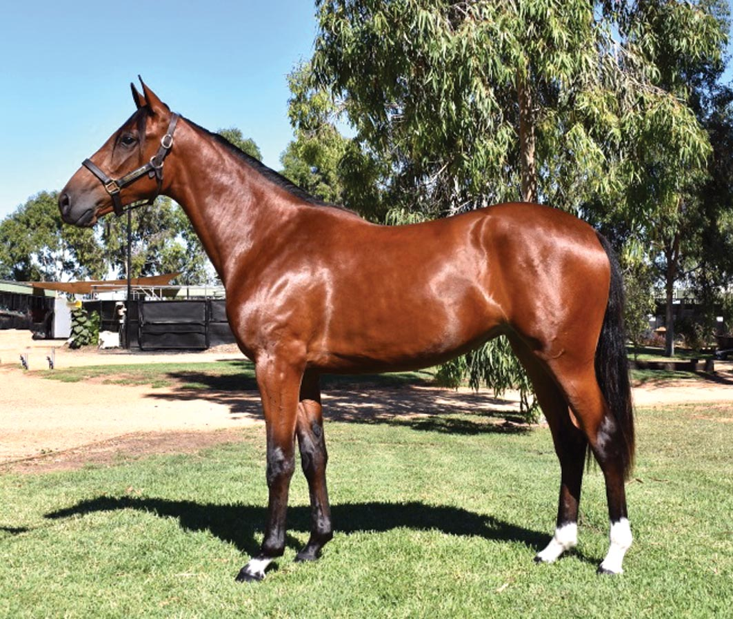 Superstar's niece in Sydney APG Sale