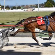 Interstate trip on the cards for Tassie Tiger