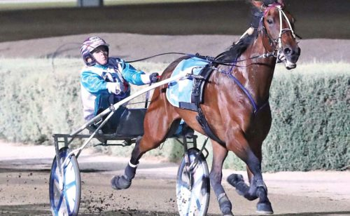 Trotter auditioning for NZ campaign
