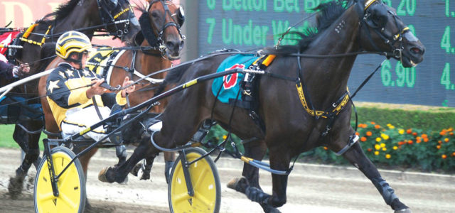 newcastle harness racing form guide