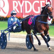 Aussie-bred favourite in NZ Derby