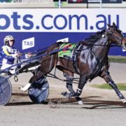 Kiwi campaign for boom filly