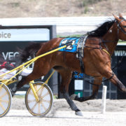 Handy trotter continues strong form