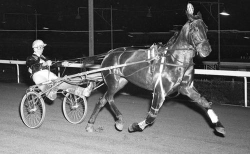 GRAMEL WAS THE DARLING OF SOUTH AUSSIE HARNESS FANS