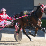 More Aussies invited to NZ Harness Jewels