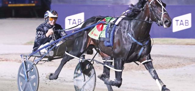 Pacing sensational sold to US interests