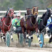 Mares' features added to trotting calendar