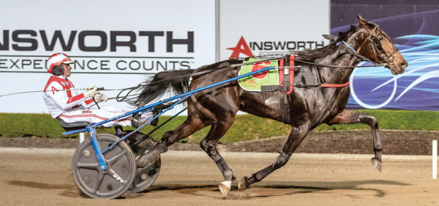 Top trotter passes test ahead of NZ trip
