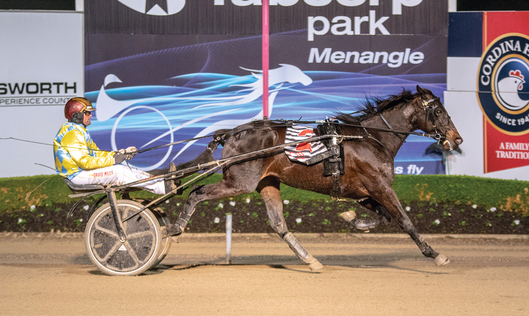 Well-bred pacer thriving as a trotter