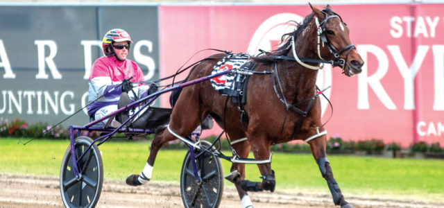 Classy mare primed for Triple Crown