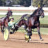 Pacing sensation to stand at Empire Stallions