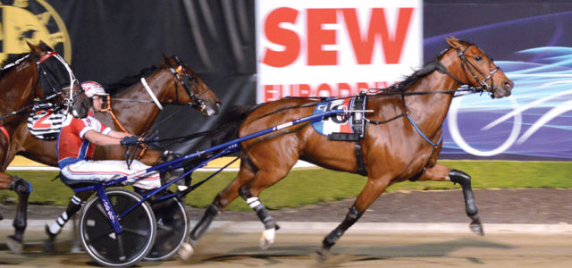 French connection as trotters return to Tassie