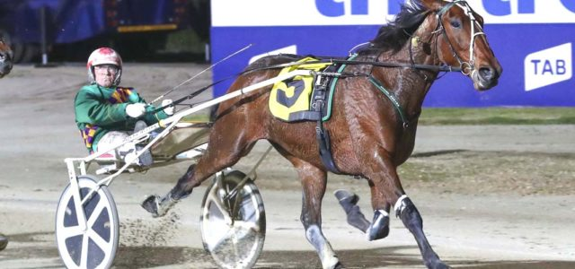 Talented trotter to extend perfect record