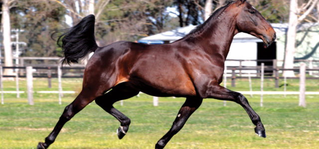 Stallion's fee reduced as part of drought relief