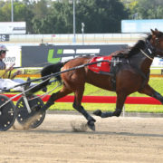 Talented trotter making up for lost time