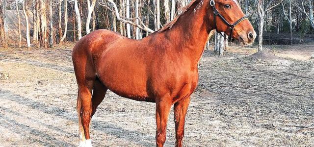 Stallion smashing fertility expectations