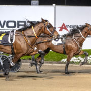 Visitors' draws for trotting stablemates