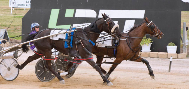 Tricky draw for consistent pacer