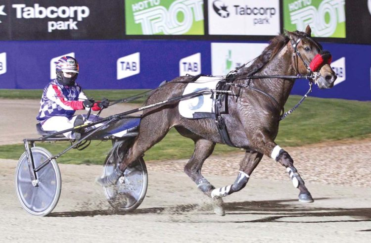 Group One trotter returning for new stable
