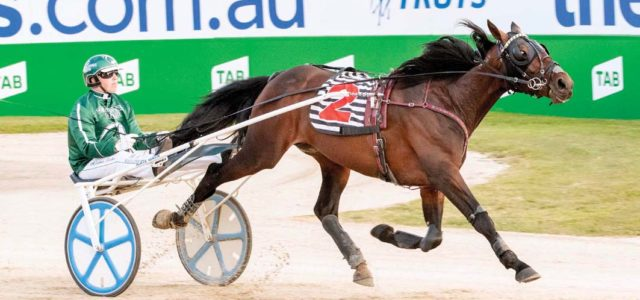 No surprises in Trotters' Inter Dominion heats