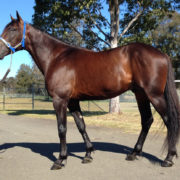 Certainty at Albion Park tomorrow