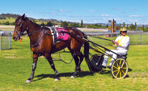 Mare's tough task in Gold Nugget