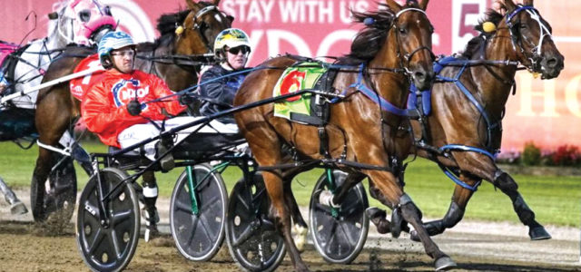 Outstanding mare chasing fairytale ending
