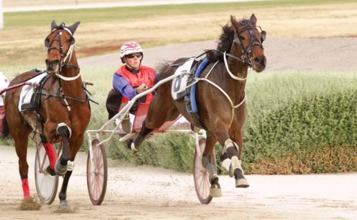 Squaregaiter to bounce back in Cup