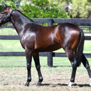 Perth Sale to continue Australian Pacing Gold trend