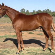 Stellar offerings at APG's Premier Trot Sale
