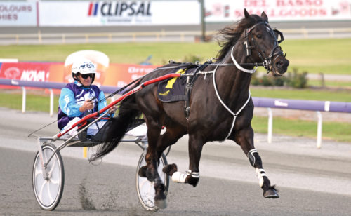 New home for exceptionally-bred trotter
