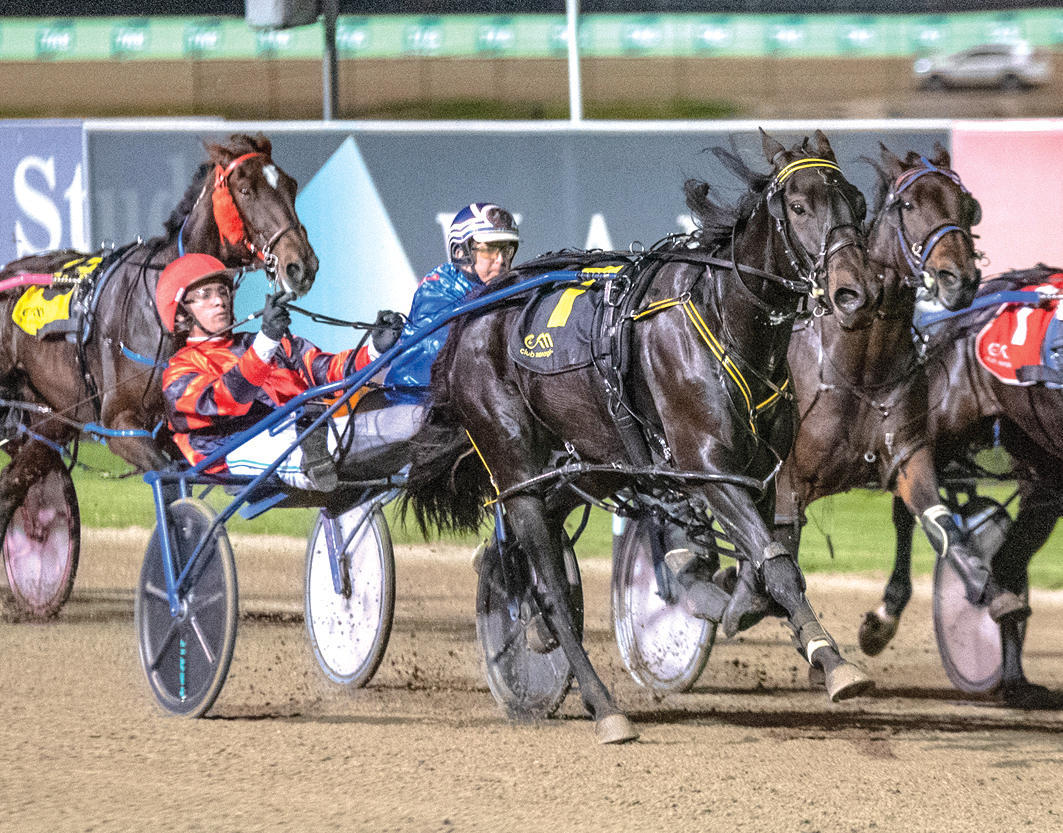 Modest plans for promising mare