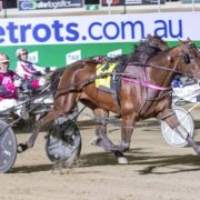 Australian Pacing Gold dominates national awards