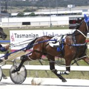 Sires' Stake next target for promising pacer
