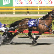 New Zealand Cup winner out of Free-For-All