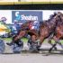 Filly primed for feature race treasure