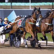 Retirement looming for classy trotter