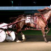 Aussie Princess all class around Yonkers