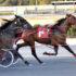 Former Kiwi mare scores in America