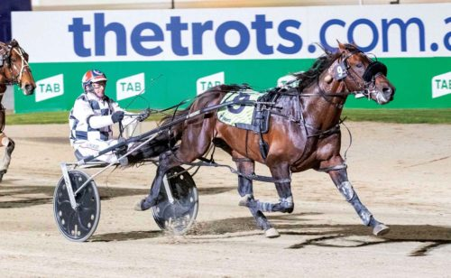 No interstate trip for Group One winner