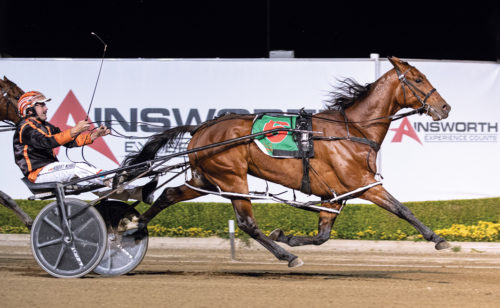 Latest stable acquisitions ready to hit winning form