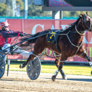 Rising star a certainty like death and taxes