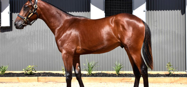 Five stages of yearling sales preparation